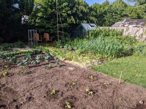 benefits of a kitchen garden